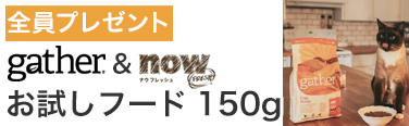 now&gatherお試しフード全員プレゼント