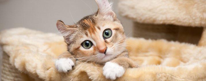 猫 便秘 餌