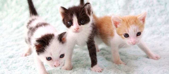 猫のトイレのしつけ方子猫のトイレトレーニング編プレミアム